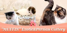 """MUFFIN"" Exotic&Persian Cattery"